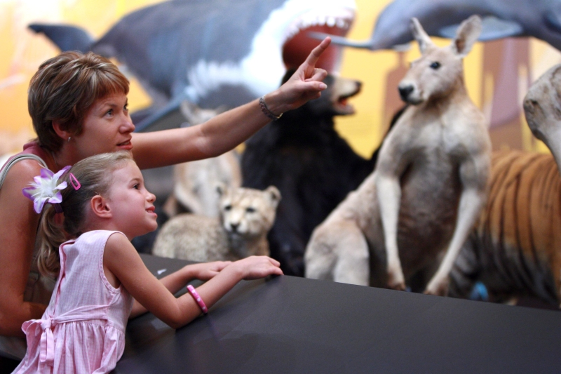 Child viewing a kangaroo in the exhibition