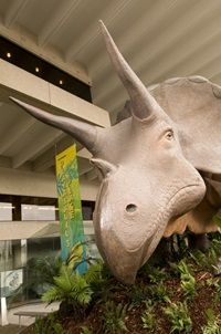 Model of Triceratops