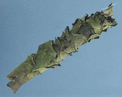The cigar-like nest of a leaf-cutter bee removed from in fold in a curtain. This nest is composed of several individual cells staked end on end.