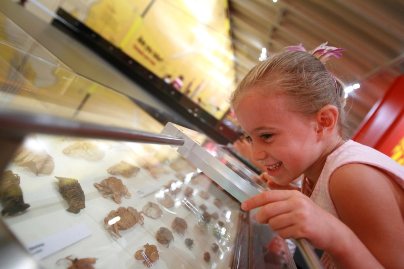 Child looking at display of crab specimens