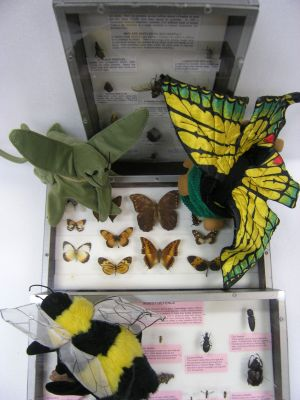 Loan kit of Insects
