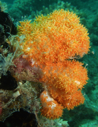 Types Of Corals Biodiscovery And The Great Barrier Reef
